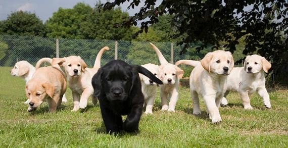perro+cachorro+socialización