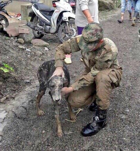 tragedia perros macao