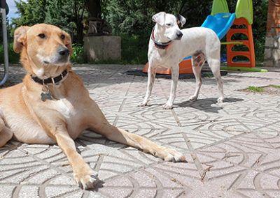 Guardería Canina Deperroaperro.com Madrid