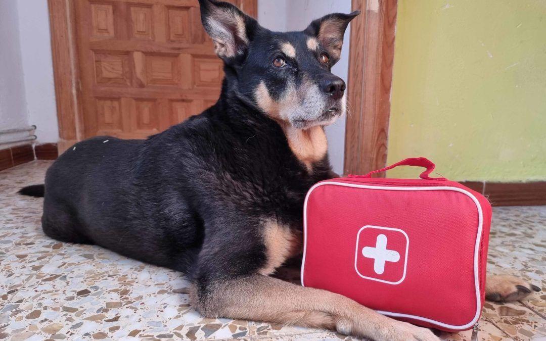 ¿Qué deberíamos llevar en el botiquín del perro?